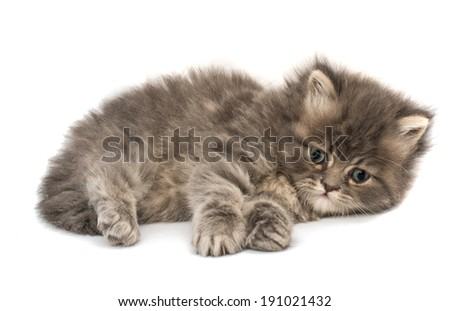 little fluffy kitten on a white background - stock photo