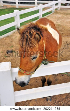 Little Foal - stock photo