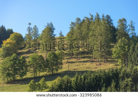 Little forest on top of the hill in the limestone alps known as Hintergebirge. The mountains are in a tributary valley from the Enns valley in Upper Austria. It is the largest forrest area in Austria - stock photo