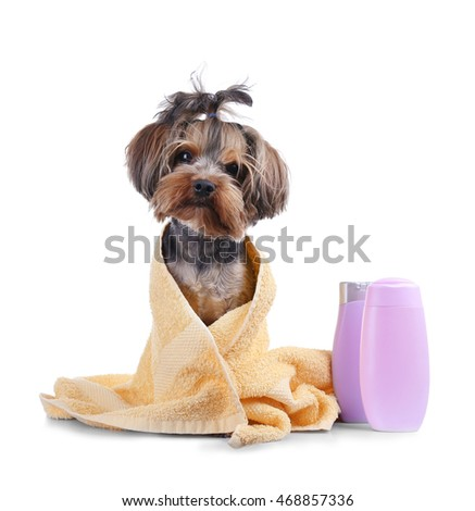 Little funny dog with towel isolated on white