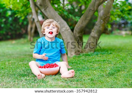 Little funny kid boy having fun with picking and eating cherries in domestic garden on warm summer day, outdoors. Healthy snack for children in summer. Kids helping with gardening - stock photo