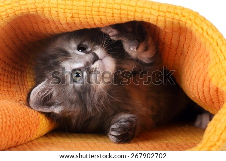 Little funny kitten playing in a yellow blanket - stock photo