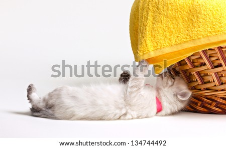 little furry  kitten and yellow towel in basket on white - stock photo