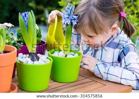 Little gardener watering flowers - child girl watering flowers. Gardening, planting concept - little girl watering hyacinth  after planting.  - stock photo