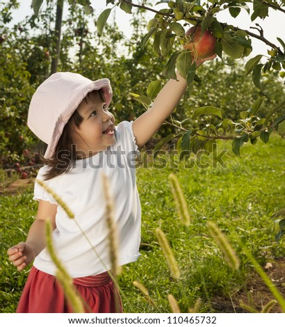 Little girl child picking apple at orchard