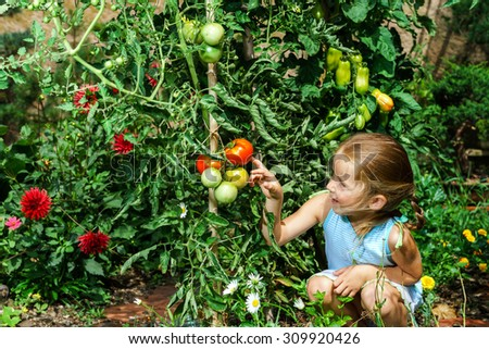 Little girl helping her mother with tomato in the garden, childhood