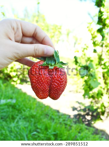 little girl holding strawberries in her little hands on the background of green grass