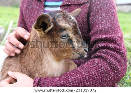 Little girl holding the small / baby goat.
