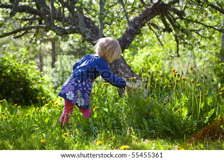 Little girl outdoors on a summer day picking dandelions