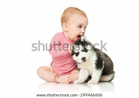 Little girl playing with a puppy husky, isolated on white