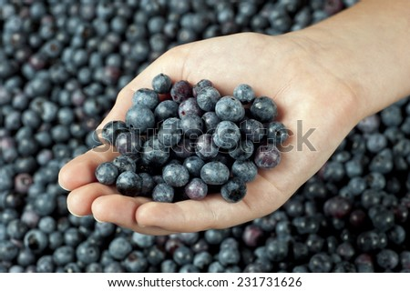 Little Girl's Hand Holding Fresh Blueberries Surrounded By Fresh Blueberries - stock photo