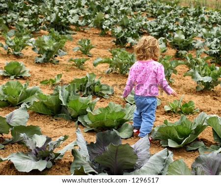 Little girl walking through a cabbage patch garden - stock photo