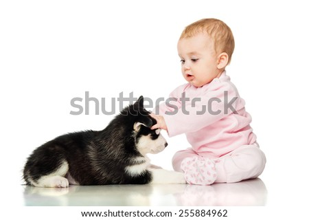 Little girl with a puppy husky - stock photo