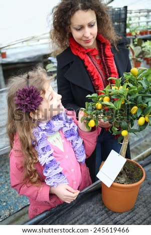 Little girl with mother standing next to small tree citrus cumquat in the greenhouse  - stock photo