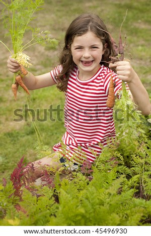 little girl (7 years old) picking carrots out of vegetable garden
