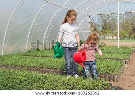 little girls watering seedlings Tomato