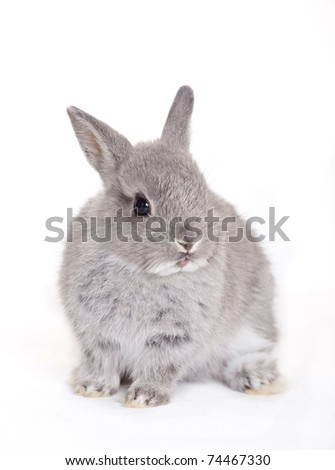 Little gray baby bunny, rabbit - stock photo
