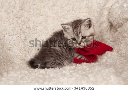 little gray kitten in a red scarf and New Year's spheres  - stock photo