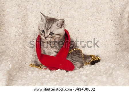 little gray kitten in a red scarf and New Year's spheres