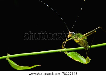 Little green insect on green leaf - stock photo