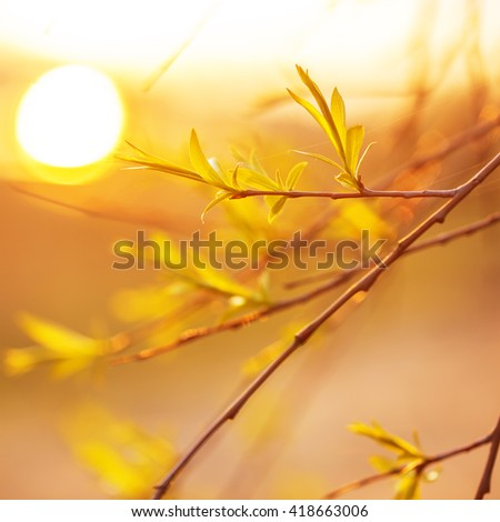 little green leaves on tree branches in forest on yellow soft sunlight background. Outdoor nature photo in spring  - stock photo
