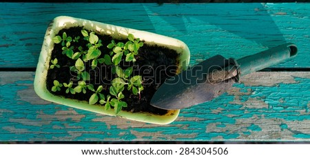 Little Green Sprouts and Small Gardening Tool  on Shabby Wooden Background - stock photo