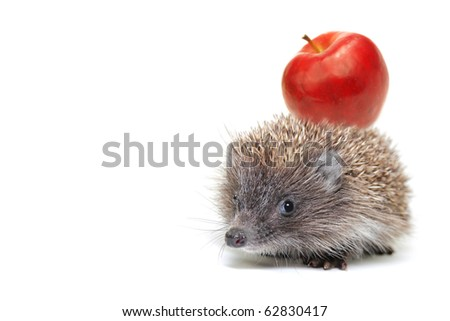 Little hedgehog with an apple on a white background - stock photo