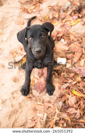 Little homeless black dog on sea beach - stock photo