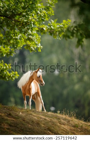 Little horse - stock photo