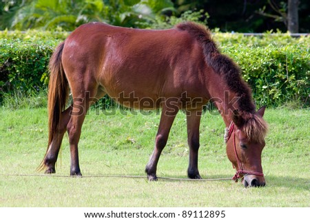 Little horse eat the grass - stock photo