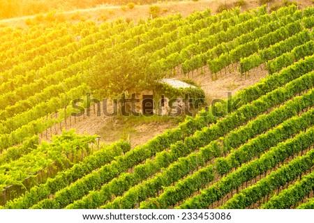 Little hut among vineyard - stock photo