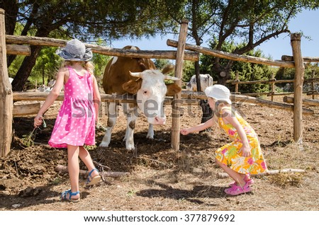 little kids feeding cow in the farm