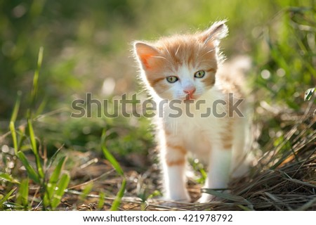 Little Kitten and Bokeh; a kitten with its tail in bokeh background