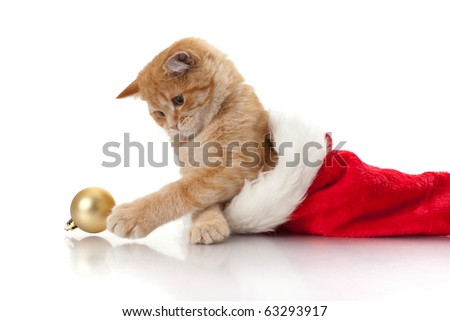 Little kitten and headdress of santa claus on a white background. - stock photo