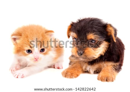 little kitten and puppy isolated in white  - stock photo