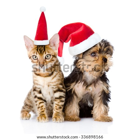 Little kitten and puppy sitting in red christmas hats. isolated on white background - stock photo