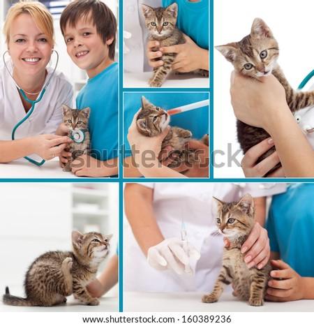 Little kitten at the veterinary collage- focus on the cat - stock photo