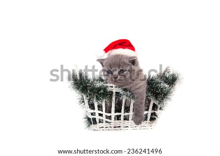 Little Kitten British blue Santa Claus sitting in a basket. Kitten one month. - stock photo