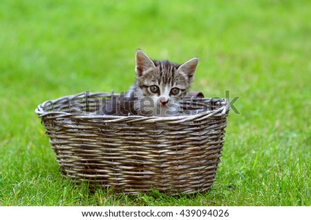 Little kitten in a basket - stock photo