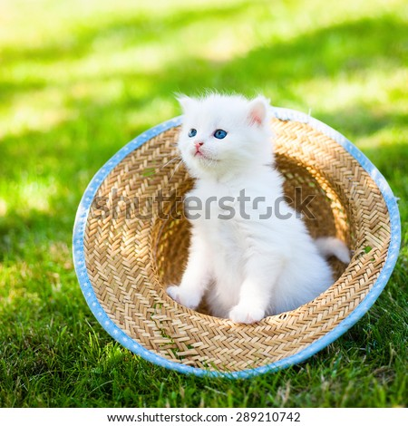 Little kitten in a hat on the grass, - stock photo