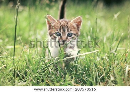 Little kitten in the garden. - stock photo