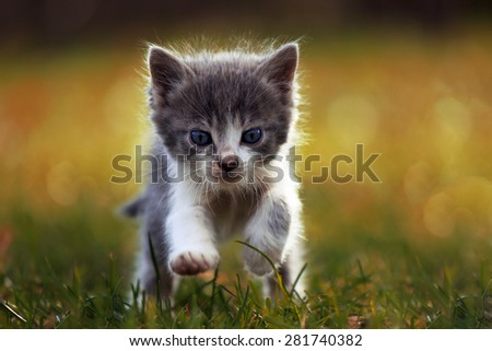 Little kitten is running on the grass - stock photo