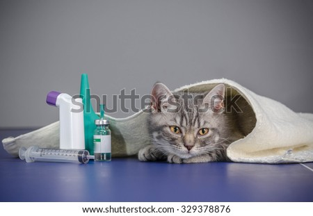 little kitten is sick, treatment kitten - stock photo