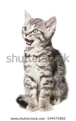 little kitten isolated on a white background