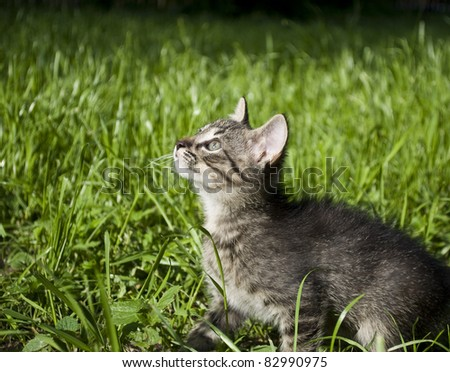 Little kitten looking curiously in the grass - stock photo