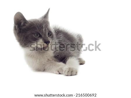 little kitten looks  - stock photo