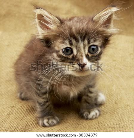 little kitten on linen texture - stock photo