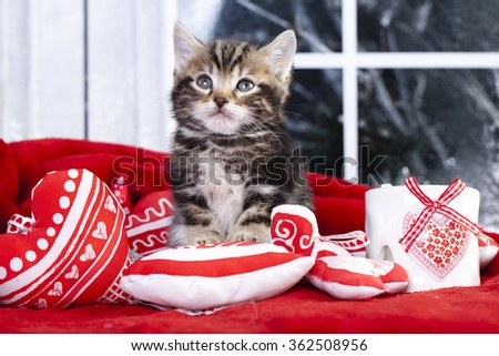 Little kitten  on the red heart-shaped pillow