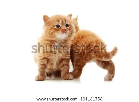 little kitten playing isolated on a white background - stock photo