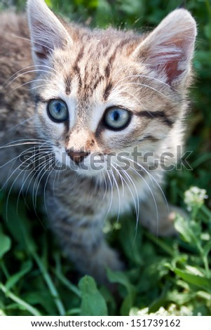 little kitten playing on the grass close up - stock photo